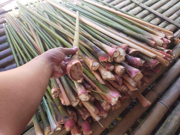 Pelbagai produk makanan tempatan termasuk hasil hutan dan hasil tani seperti tep…