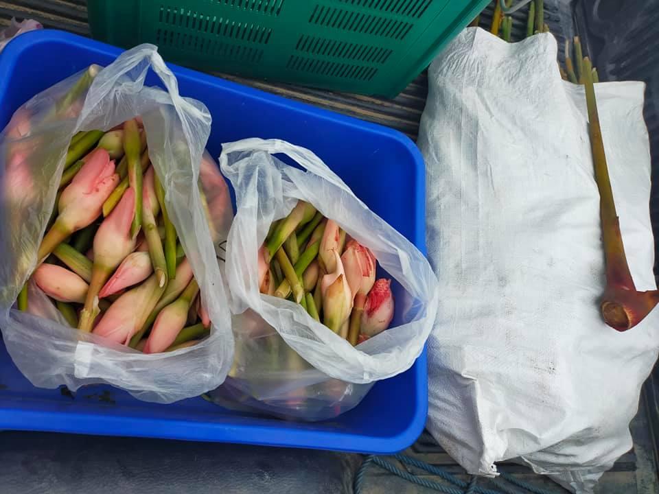 Jom berjual-beli di TIMOGAH – pelbagai sayur kampung, hasil tani dan hasil hutan…