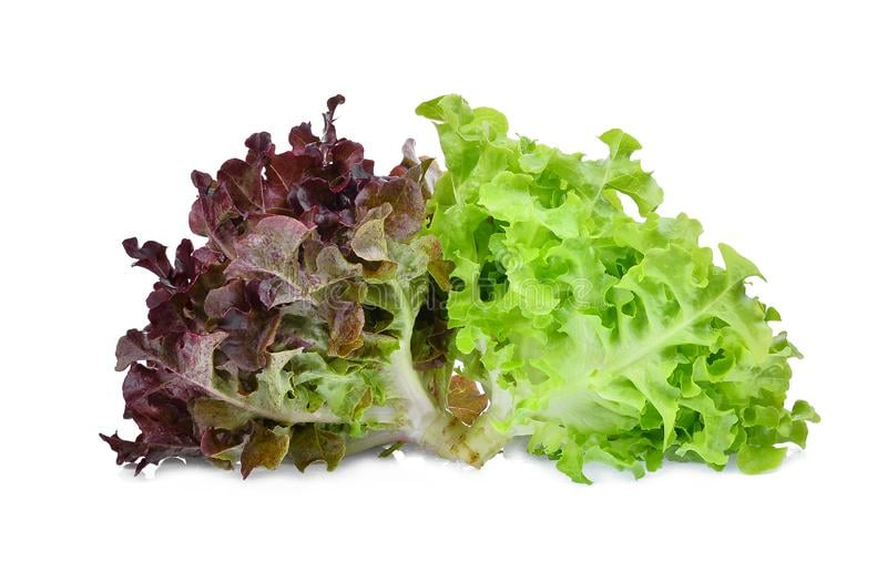 GREEN & BROWN LETTUCE FRESH FROM THE FARM – check timogah.com, our website f…