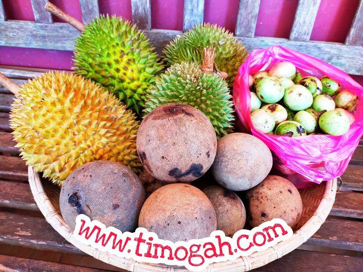 Jom online shopping – www.timogah.com – semua yang terbaik di Borneo. Buah? Sayu…