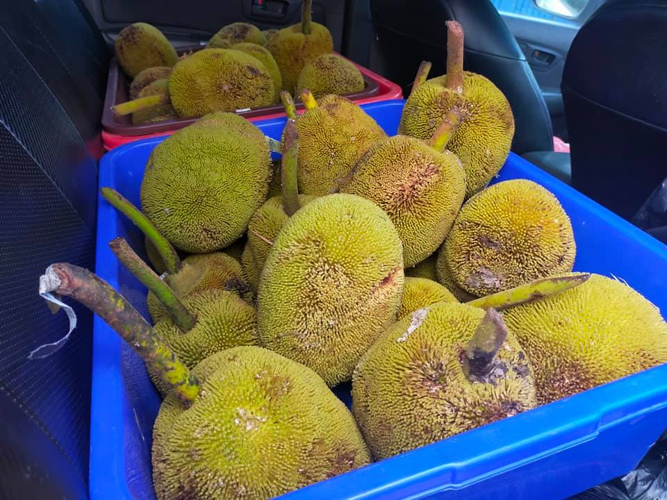 Order here  buah tarap our favourite in Borneo! And many more at TIMOGAH.
