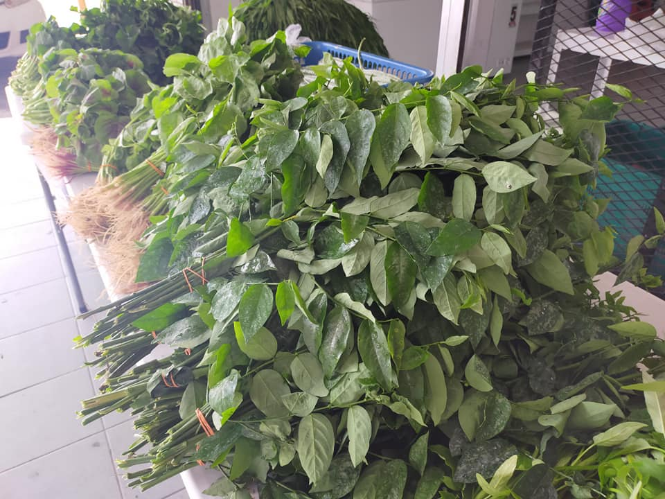Tambah lagi macam-macam jenis sayur di TIMOGAH. Jom shopping. 1 ikat rm2, 3 ikat…