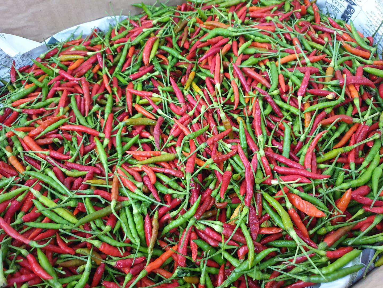 Fresh picked Cili Api Kampung RM40/kg